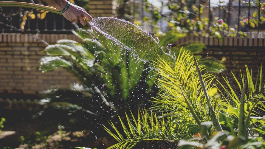 persona regando una planta en jardin