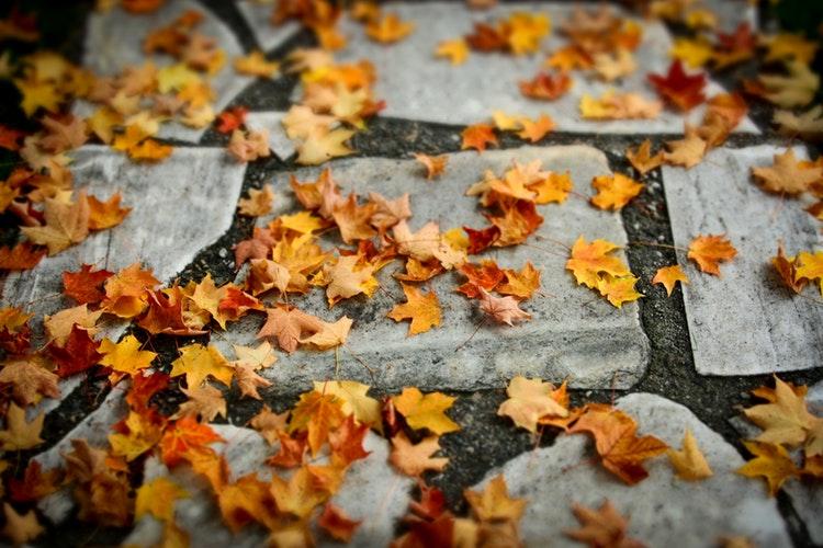 los sopladores de hojas