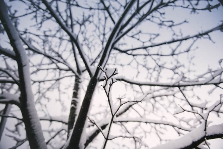 objetivos de la poda en invierno