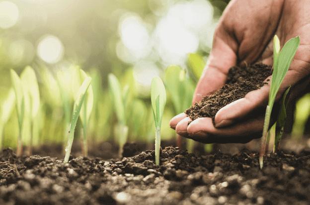 fertilizante-para-cesped