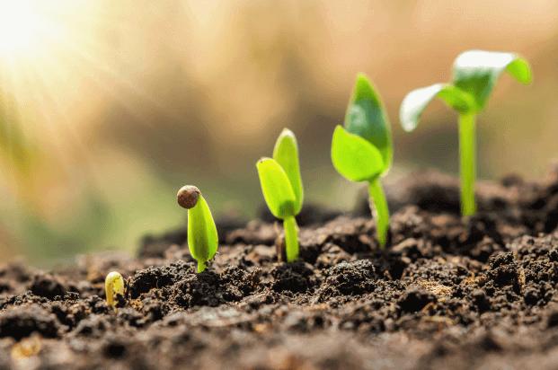que fertilizante se usa para el cesped