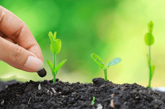 que fertilizantes usar para el cesped