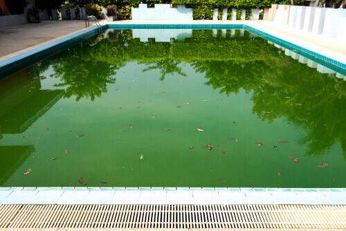 algas-en-la-piscina