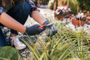 como-cuidar-un-jardin